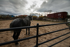 one or the horses at Assiniboine Park Zoo (Maicdlphin) Tags:
