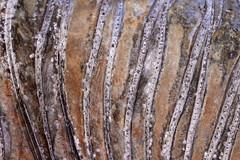 La Runion (ingridkreuz) Tags: runion indischerozean indianocean insel frankreich france outremer botanischergarten natur nature plants ppig tropisch tropical structure struktur muster pattern