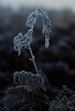 Short Lived Beauty (paulinuk99999 - tripods are for wimps :)) Tags: paulinuk99999 macro bracken ice crystals beauty sal135f18za