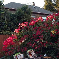 Catch the Light (Melinda Stuart) Tags: flowers mail roof afternoon sunshine light garden house vine bougainvillea red mailbox