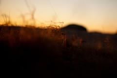 Golden hour (Marius K. Eriksen) Tags: golden hour norge norway sunset coast nature natureporn natur solnedgang bokeh stfold rsneskilen
