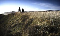 Final HDR.- End HDR. N146 (Yon Ibarrra) Tags: hdr oscura dark hierbas grass cementerio cemetery caas canes cielo sky tetrica creepy alavaaraba basquecountry espaa spain europa euskadi