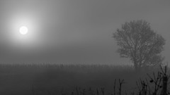 Frosty, misty sunrise (Che Camera) Tags: bw bischoffingen dew dunst ef100lf28isusm gegenlicht kaiserstuhl landscape landschaft nebel sonnenaufgang sunrise tau vineyard vogtsburg weinberg wine winter backlight vogtsburgimkaiserstuhl badenwrttemberg deutschland de