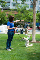 Events_DogDaysOfSummer_BM_07022015_0014