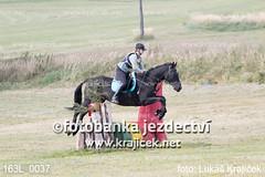 163L_0037 (Lukas Krajicek) Tags: military czechrepublic cz kon koně vysočina vysoina southbohemianregion blažejov dvoreček všestrannost dvoreek