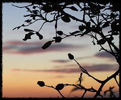 As morning dawns and evening fades... (Lizinnie) Tags: dawn shadows dmmerung ostsee schatten schleswigholstein abendrot hagebutten geltingerbirk
