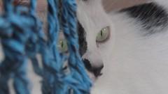 549y (Vitor Nascimento CSD) Tags: blackandwhite eye look cat eyes olhar chat olhos yeux gato felino whitecat gatopretoebranco olhosdegato gatobranco olhosdefelino