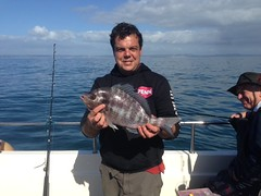 "Darren Herbert with 3lb 2oz Black Bream • <a style=""font-size:0.8em;"" href=""http://www.flickr.com/photos/113772263@N05/21983189392/"" target=""_blank"">View on Flickr</a>"