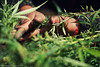 Rubbing cannabis by hand (f/4) Tags: india manali cannabis himachal tosh kullu hashish pradesh charas parvati