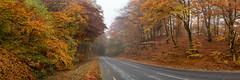 Paradisporten (claustral) Tags: road autumn trees panorama orange fall yellow forest warm sweden gatesofparadise 2015 interestingness69 i500 tornahällestad paradisporten explore20151104