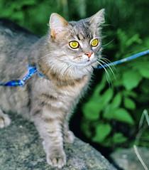 037_34A (d_fust) Tags: cat kitten gato katze  macska gatto fust kedi  anak katt gatito kissa ktzchen gattino kucing   katje     yavrusu