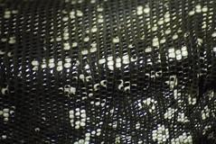 Lizard Skin (Anxious Silence) Tags: texture pattern skin lizard scales