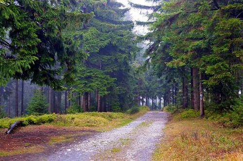 Borówkowa: leśna droga / forest road