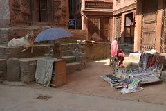 Nepal, Bhaktapur - UNESCO Weltkulturerbe seit 1979 (dscheronimo) Tags: street travel nepal nikon market ngc goat unesco ziege himalaya reise bhaktapur weltkulturerbe d800 hft bhaktaphur himalayafairtrekking