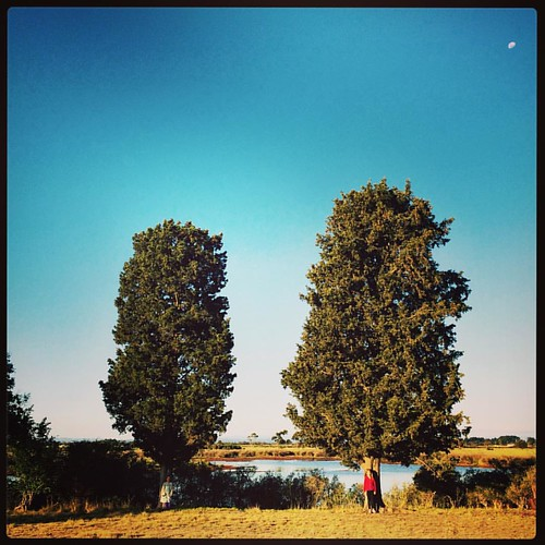 317/365 • two trees, two Smalls, and the moon • #317_2015 #trees #5yo #7yo #endofday #boatyard #Spring2015 🌗🌳🌳👭