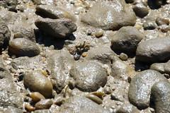 Crab (1) (sixdos) Tags: nature fauna canon sand crab queensland missionbeach biodiversity invertebrate invertebrates tropicalnorthqueensland farnorthqueensland australiannativefauna garnersbeach canoneos7dmarkii missionbreaze