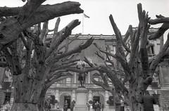 Ai Wei Wei - Tree (pho-Tony) Tags: slr london film japan 35mm lens japanese reflex 28mm royal e single automatic 135 academy wei f28 ai ilfordhp5plus nikonem aperturepriority eseries semistand aiweiwei blackwhitebwblackandwhiteilfordhp5plusfilmrodinal