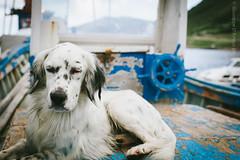 Marettimo - ben pi di un lupo di mare ( Peppedam -www.glam.vision) Tags: blue dog islands photo nikon mare porto sicily egadi isole nikkor85mm14 giuseppedamico nikond3