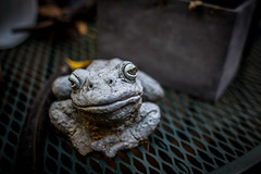 Froggy Style (Cheikh.Ra) Tags: cuba cuban cheikhrafilms dgarrett