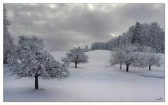 Winter Dream (VandenBerge Photography) Tags: travel trees winter sky snow weather clouds canon season landscape schweiz switzerland europe lonelyplanet winterscape berneseoberland cantonberne