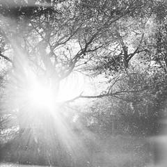 At the gate (Nassia Kapa) Tags: morning light sun hope greece parnitha nassiakapa