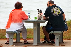 got my attention (Leonard J Matthews) Tags: dog table seaside focus small australia attention seated seashore straddle humanhunt mythoto