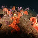 Deepwater garden #marineexplorer