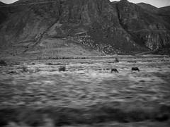 View from the A1 (TheSimonBarrett) Tags: iceland lveldi sland