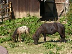 Tierpark Meißen-Siebeneichen (Seesturm) Tags: 2016 2014 seesturm germany deutschland meisen meissen tierpark heimattierpark tiergarten heimattiergarten siebeneichen tiere kinder tierkinder
