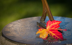 Autumn Time. (_Anathemus_) Tags: autumn leaf fall sun clock nikon d750 upton park poole uk dorset england 2470mm