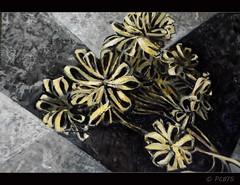 Palmes (PCB75) Tags: catalunya catalogne catalogna catalonia barcelona pintura peintre pintor olisobretela pinturaaloli seglexx art artista 19112002 quadre tela hernanpic palmes