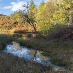 Holme Fell (RD400e) Tags: canon eos 5d mk3 2470l f28 gitzo bwpolariser lake district holme fell water walking trees autumn reflections