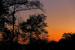 East Texas Sunset (Ellsasha) Tags: sunset colours colors easttexas trees silhouettes sky skies