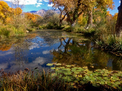 Shady Lakes - water lily gardens and trout fishing.  Albuquerque North Valley.  Sandia Mts. in the background.  New Mexico, USA. (cbrozek21) Tags: shadylakes albuquerque newmexico water pond reflection autumn cottonwood autumncolors reflectioninwater tree treereflection fantasticnature vividstriking astoundingimage