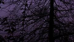 Storm (MATHTOUFFE) Tags: purple blur winter pluie orage clair storm