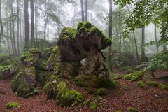 Bosques encantados (Javi Diez Porras) Tags: bosques primavera urbasa niebla karst