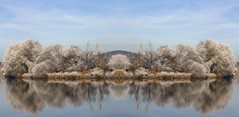 Mirrored (Colourblind Chris) Tags: frost ice river forth stirling