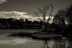 Before the Rains (Bets<3 Fine Artist ~Picturing Light ~ Blessings ~~) Tags: blackwhitephotos mainenortheasternunitedstates light shadow clouds water trees reflections floating landscape waterscape
