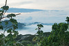 Panama City Skyline (Hamilton Images) Tags: panamacityskyline tropicalforest clouds mist canopytower panama centralamerica canon 7dmarkii 24105mm october 2016 img4968