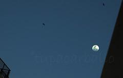 APROXIMACIN LUNAR. CABA. ARGENTINA. (tupacarballo) Tags: caba capitalfederal boedo argentina luna moon tupacarballo cielo aves celeste canon fotografadocumental astronoma sky satliteterrestre streetphotography