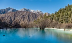 Now online: Surreal fairy tale landscape at #huanglong near #jiuzhaigou #nature #china #sichuan See site 👆in bio for full post #travel ------------------------------------------- #NatGeoTravel #lp #expediapic #rtw #tripnatics #lovetheworld #tra (christravelblog) Tags: now online surreal fairy tale landscape huanglong near jiuzhaigou nature china sichuan see site 👆in bio for full post travel natgeotravel lp expediapic rtw tripnatics lovetheworld traveller igtravelers travelling beautifuldestinations traveldeeper writetotravel bucketlist huffpostgram postcardsfromtheworld travelphotography travelblogger igtravel travelstoke wanderlust instatravel photography travelgram travelingram follow me visit website wwwchristravelblogcom more stories feel free share photos but do credit them contact cooperate