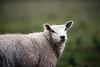'Elliot' (Jonathan Casey) Tags: grass gunton park norfolk england uk nikon d810 200mm f2 vr