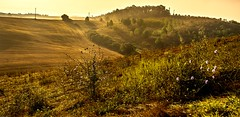 Light in the valley.  ( Explored ). (AlbOst) Tags: italy morninglight explore tuscany chicory morningsun valleys morningmist coth5 laquintaessenza