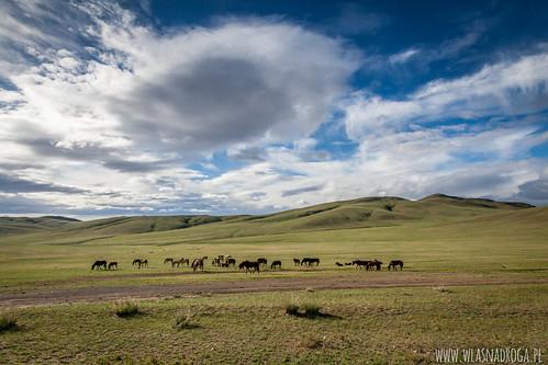 Mongolskie stepy