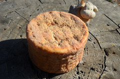 Queso artesano de oveja viejo (Ricard2009 (Mart Vicente)) Tags: cheese queso queijo sir fromage ost formaggio sajt kaas  caws  formatge peynir gazta      brnz sris ilobsterit