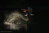 White Tail (hvhe1) Tags: wild fish bird nature animal norway fishing eagle wildlife raptor catch birdofprey zeearend noorwegen roofvogel whitetailedeagle seeadler haliaeetusalbicilla specanimal olemartindahle hvhe1 hennievanheerden pygargueàqueueblanche lauvsnes