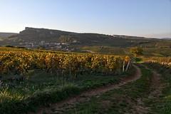 Vigne colorée d'automne (Chemose) Tags: autumn france automne vineyard burgundy vine bourgogne vignoble hdr vigne roche solutre solutré mâconnais southburgundy