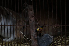 Au zoo (pylote) Tags: de la lego autoportrait bretagne bosse aventure lgo