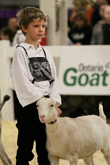 RAWF15 JSteadman 0092 (RoyalPhotographyTeam) Tags: sun cute kid royal goat 2015 rawf nov08