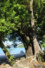 Garners Beach (172) Foreshore Vegetation (sixdos) Tags: sea sky canon landscape sand queensland missionbeach tropicalnorthqueensland farnorthqueensland garnersbeach canoneos7dmarkii missionbreaze